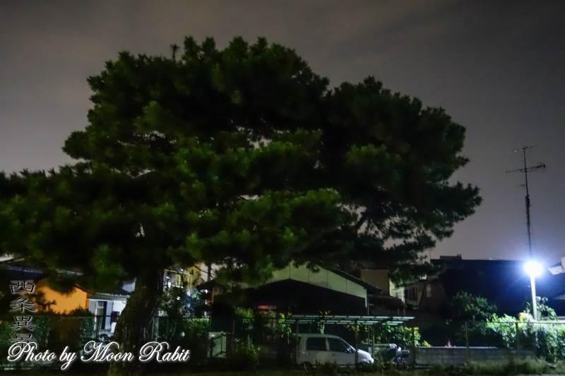欄干橋の松並木 愛媛県西条市堀端