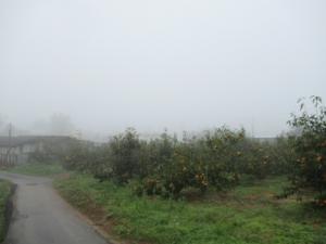 30霧 (2)