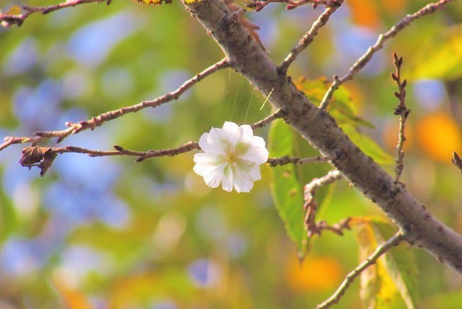 hananooka190907-106.jpg