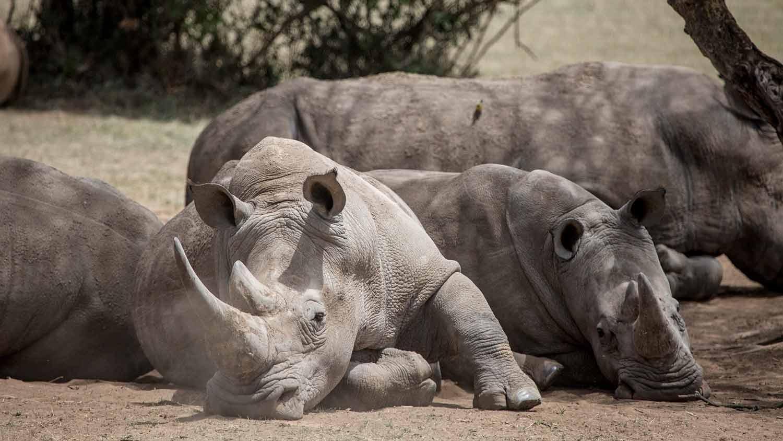 SOLIO-LODGE-Rhino-at-solio.jpg