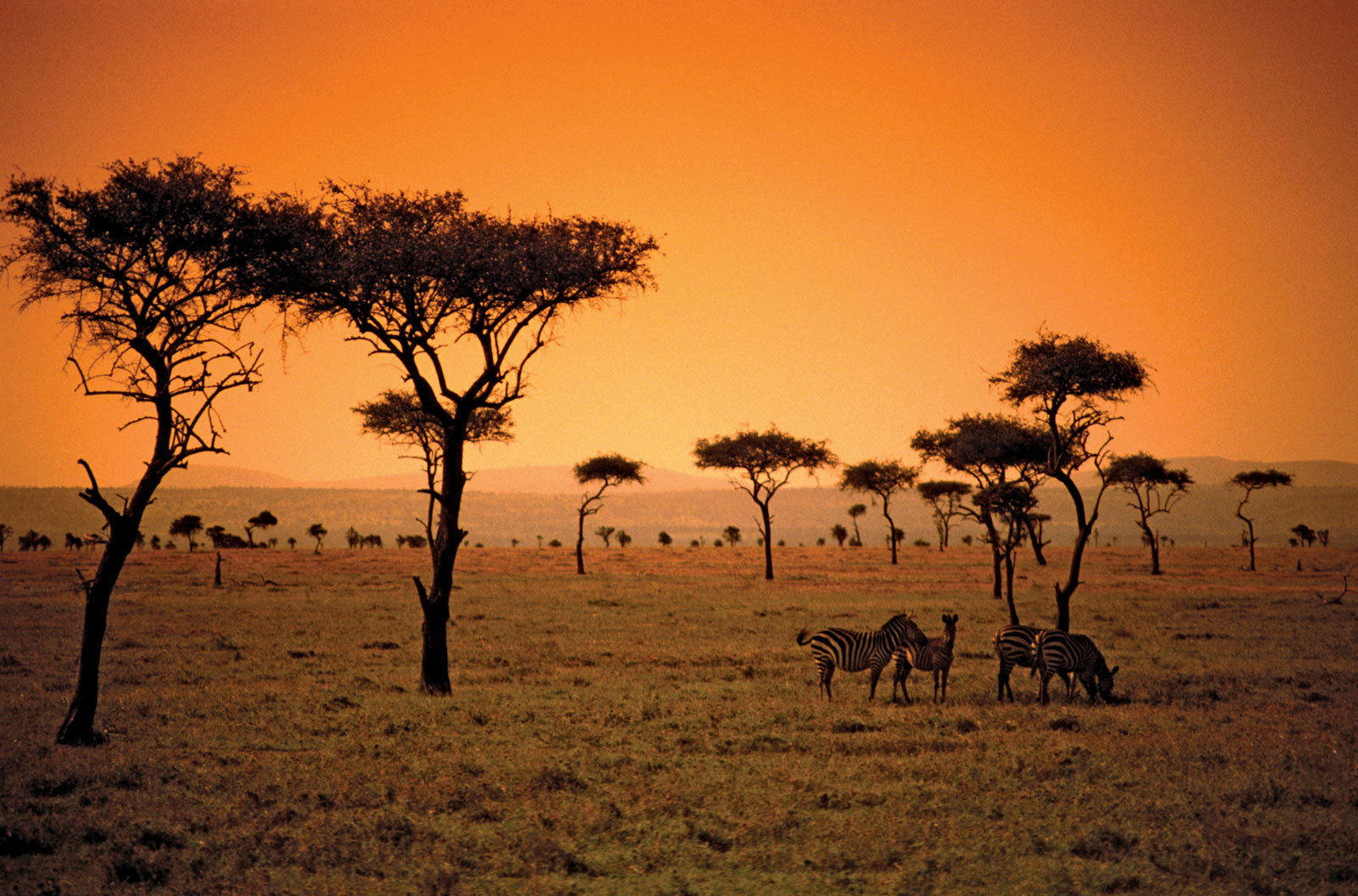 sun-savanna-African-Kenya-country.jpg