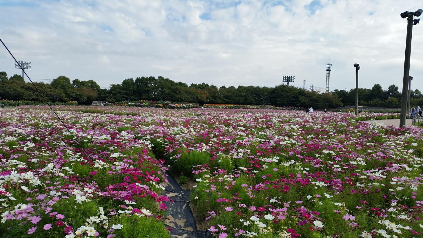 20141026_なばなの里 (9)