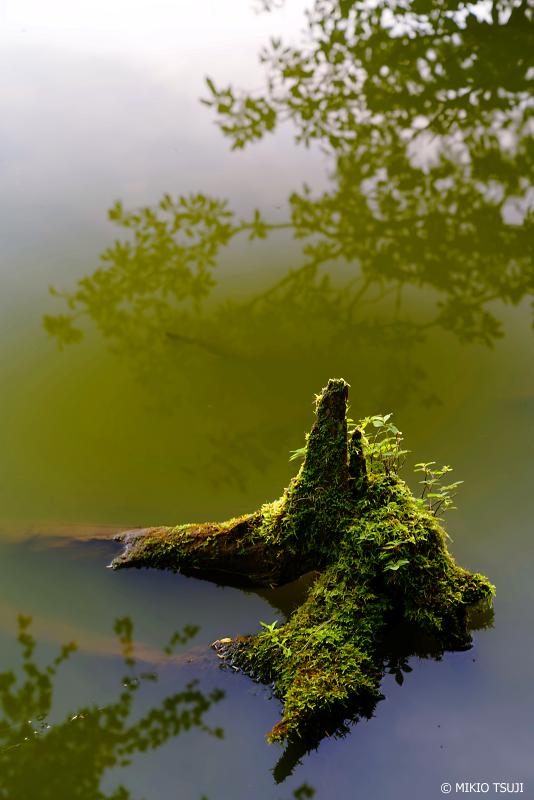 絶景探しの旅 - 1088 苔色に染まるさわら池の伝説 (山梨県 韮崎市)