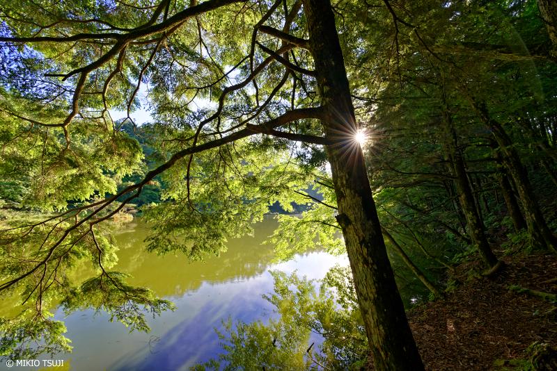 絶景探しの旅 - 1093 朝日が差し込むさわら池 (山梨県 韮崎市)