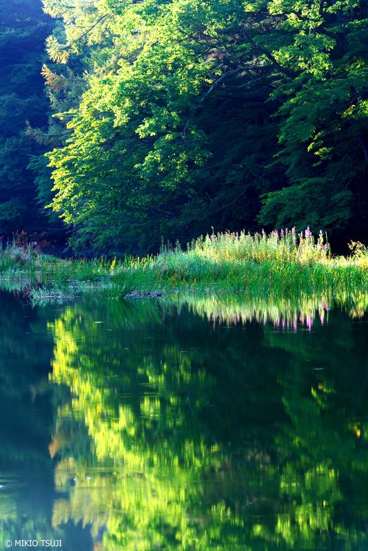 絶景探しの旅 - 1094 緑輝くさわら池 (山梨県 韮崎市)