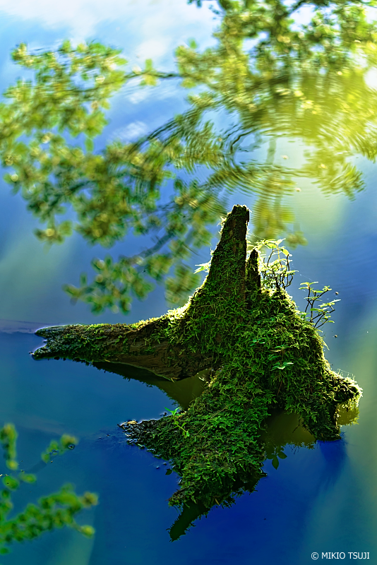 絶景探しの旅 - 1095 光受ける水面 (さわら池 山梨県 韮崎市)