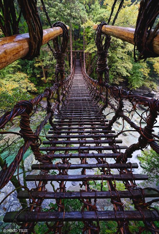 絶景探しの旅 - 1117 秋雨に濡れるかずら橋 (徳島県 三好市 西祖谷山村)