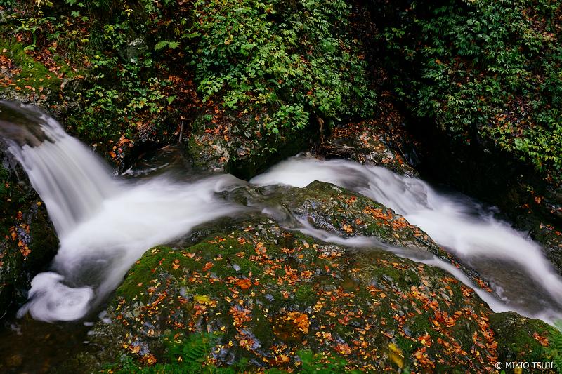 絶景探しの旅 - 1129 落ち葉の流れ (秋田県 北秋田市 森吉)