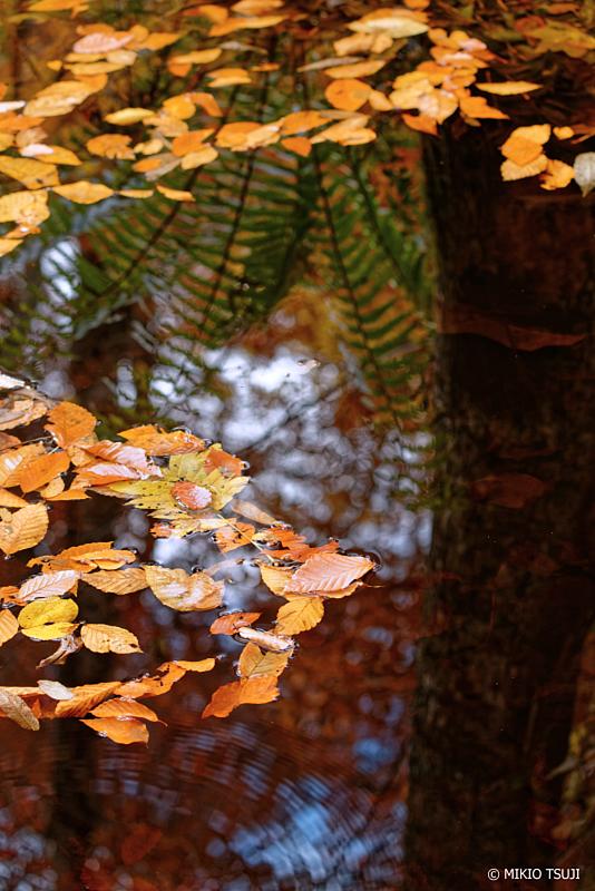 絶景探しの旅 - 1132 落ち葉の水鏡 (秋田県 北秋田市 森吉)
