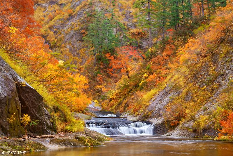 絶景探しの旅 - 絶景写真 1137 紅葉のV字谷のを流れるノロ川 (秋田県 北秋田市 森吉)