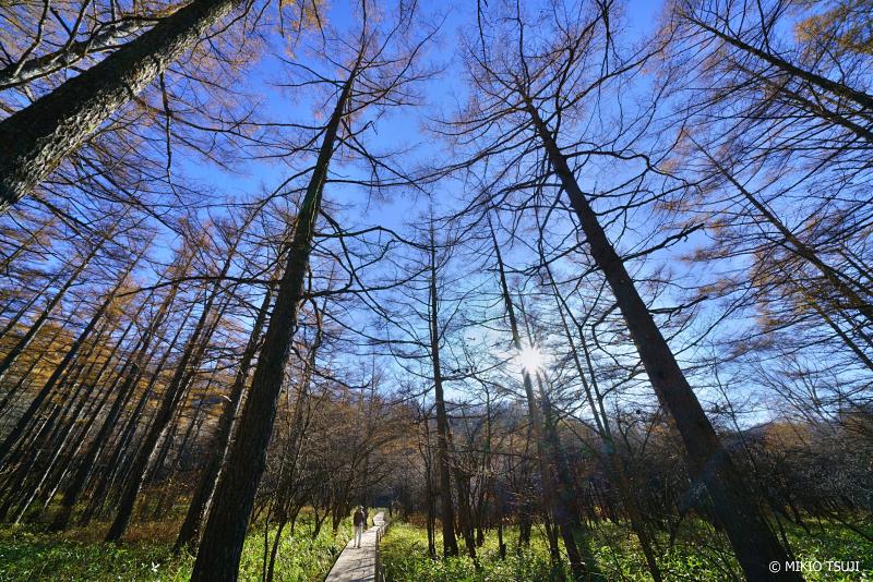 絶景探しの旅 - 絶景写真 1150 奥日光の森から (小田代原 栃木県 日光市)