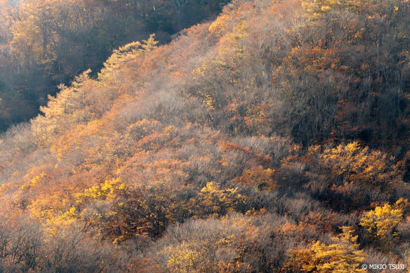 絶景探しの旅 - 絶景写真 1153 秋の光に染まる (小田代ヶ原/栃木県 日光市)