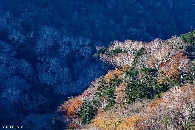 絶景探しの旅 - 絶景写真 1154 光と影 (小田代ヶ原/栃木県 日光市)