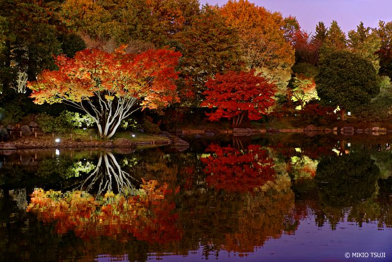 絶景探しの旅 - 絶景探しの旅 1163 紅葉のライトアップ (昭和記念公園/東京都 立川市)
