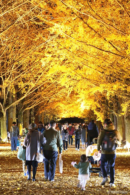 絶景探しの旅 - 絶景写真 1164 黄金に輝く夜のイチョウ並木 (昭和記念公園/東京都 昭島市)