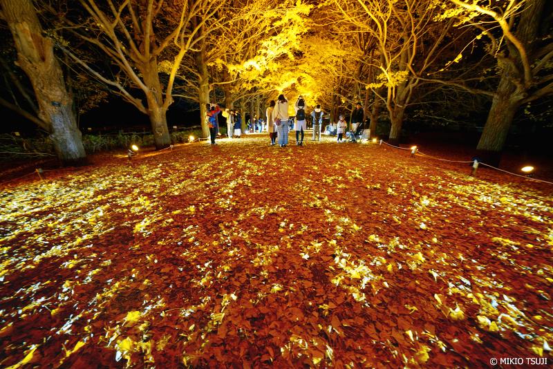 絶景探しの旅 - 絶景写真 1165 黄色い落ち葉の上で (昭和記念公園/東京都 昭島市)