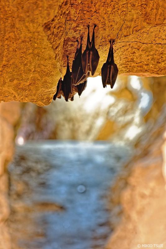 絶景探しの旅 - 絶景写真 No.1192 牡鹿鍾乳洞での出会い!間近から見るコウモリたち (北九州市 小倉南区 平尾台)
