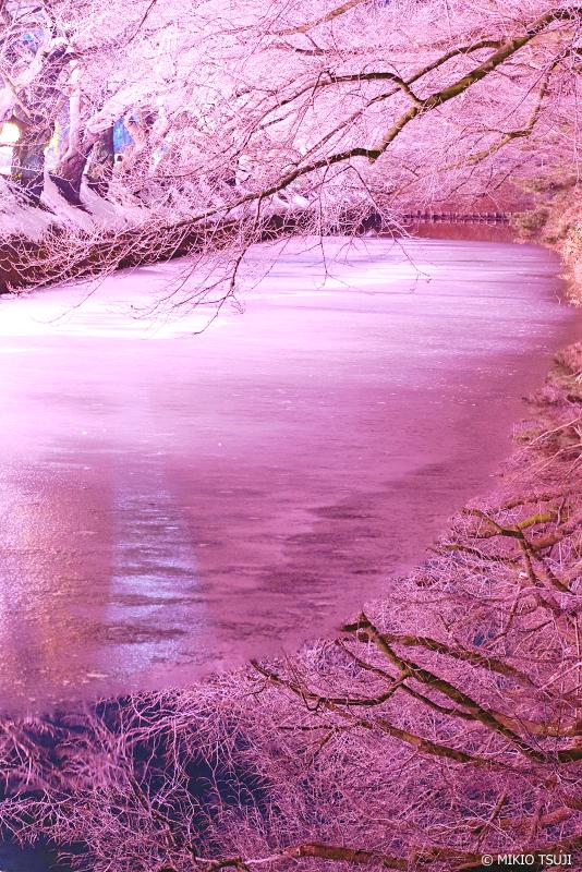 絶景探しの旅 - 絶景写真No.1205 冬に咲くさくらライトアップ (弘前公園/青森県 弘前市)