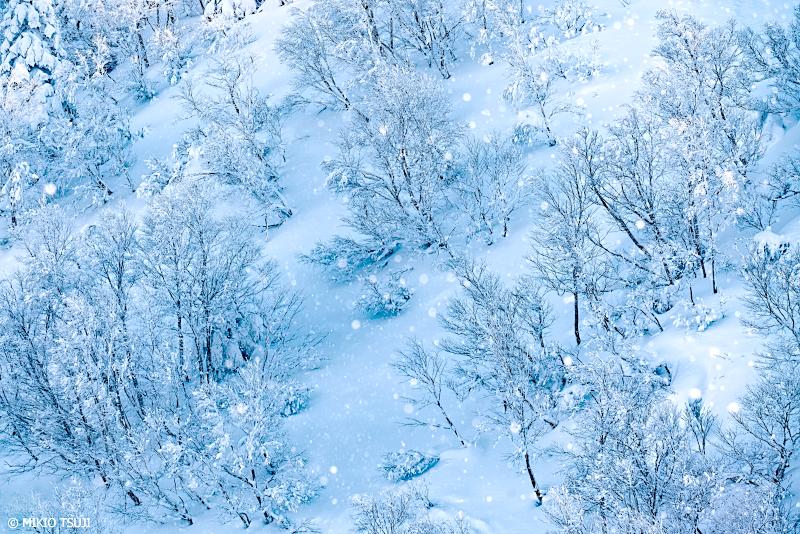 絶景探しの旅 - 絶景Photo No.1207 雪の粉の舞い (八甲田山/青森市)