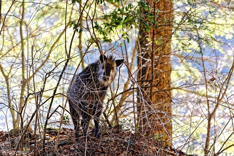 絶景探しの旅 - 絶景Photo No.1231 カモフラージュ (都民の森/東京都 檜原村)